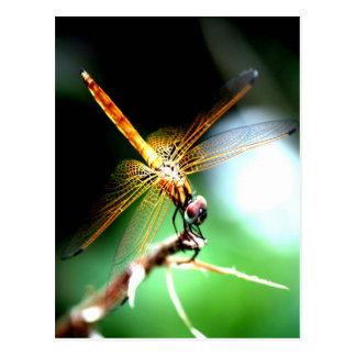 yellow dragonfly peace joy post card