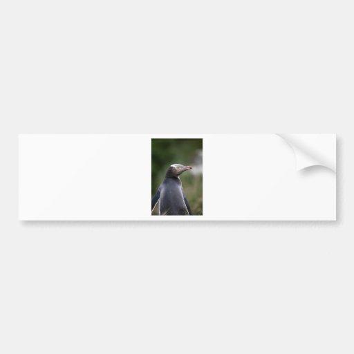 Yellow eyed penguin New Zealand Bumper Sticker
