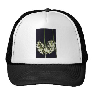 Yellow Falcatum (Dendrobium) flowers Hats