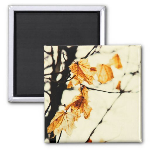 Yellow fall maple leaves magnet