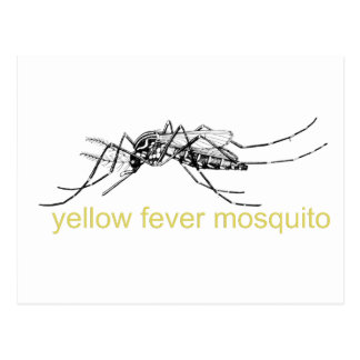 Yellow Fever Mosquito Postcard