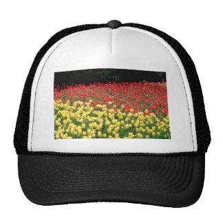 yellow Field of yellow and red tulips flowers Hats