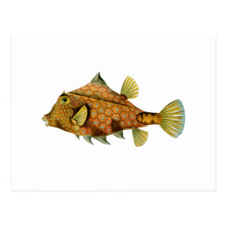 Yellow Fish Postcard