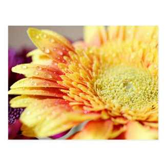 Yellow Flower And Droplets Postcard