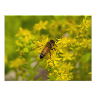 Yellow Flower and Honey Bee Maleny 2016 Photo Print