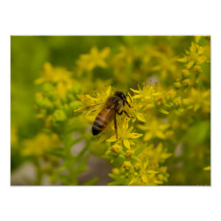 Yellow Flower and Honey Bee Maleny 2016 Poster
