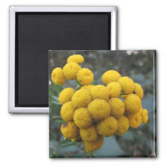 Yellow flower balls square magnet