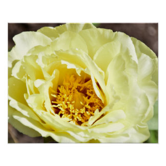 Yellow Flower Blooming in Spring Poster