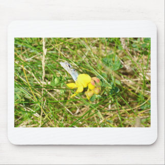 Yellow Flower Blue Butterfly Mouse Mat