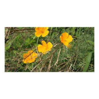 Yellow Flower Garden Photo Cards