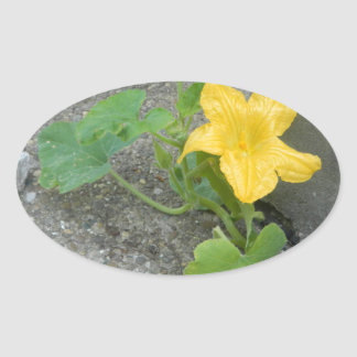 Yellow Flower Grows In Concrete Oval Sticker