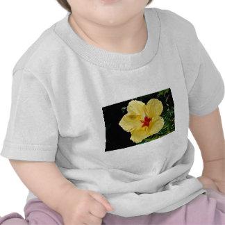 Yellow flower, hybrid hibiscus  flowers tee shirt