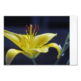 Yellow Flower Lily Photo