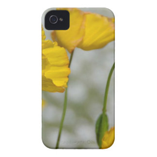 Yellow flower magic Case-Mate iPhone 4 cases