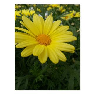 Yellow Flower of Love Postcard
