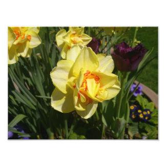 Yellow Flower Photo Print