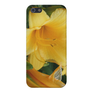 Yellow  flower Photography Case iPhone 5 Cases