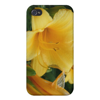 Yellow  flower Photography Case iPhone 4/4S Covers