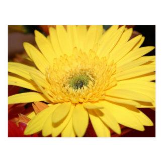 Yellow Flower Sunflower Postcard