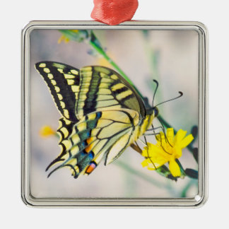Yellow Flowers and Beautiful Butterfly Silver-Colored Square Decoration