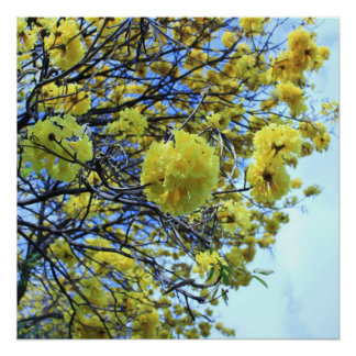 Yellow flowers blooming