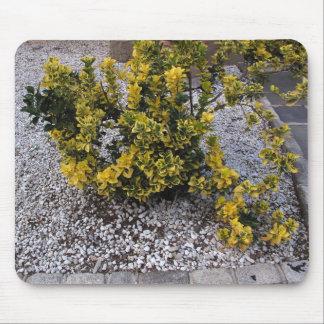 Yellow Flowers Bush Pebbles Sidewalk Photo Mouse Pad