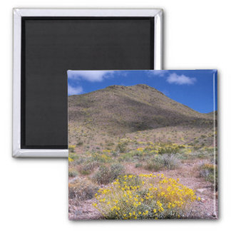 Yellow Flowers in Death Valley Magnet
