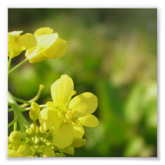 Yellow flowers macro photography poster