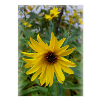 yellow flowers of autumn poster