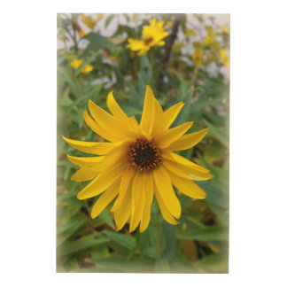 yellow flowers of autumn wood canvases