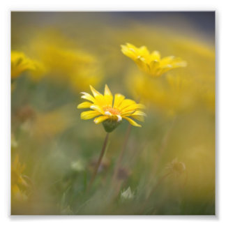 Yellow Flowers Photo Art
