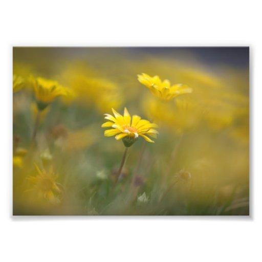 Yellow Flowers Photograph