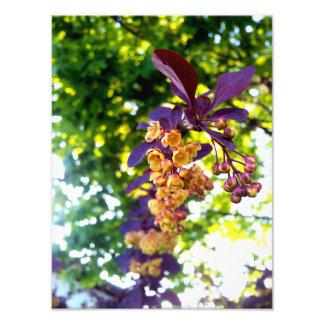 Yellow Flowers, Purple Leaves print Photograph