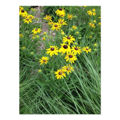 Yellow Flowers Surrounded By Grass Photographic Print