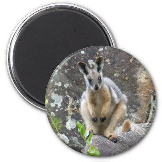 yellow footed wallaby 6 cm round magnet