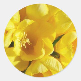 Yellow Freesia Round Sticker