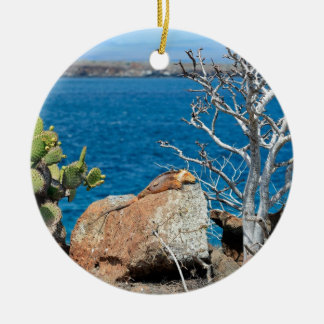 Yellow Galapagos land iguana relaxing on rock Christmas Ornament