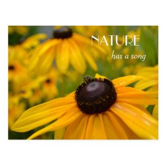 Yellow Garden: Black Eyed Susan Song Postcard