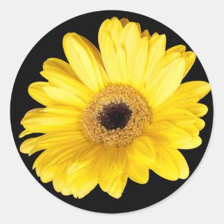 Yellow Gerber Daisy Close Up Photograph Sticker