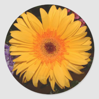 Yellow Gerber Daisy Round Stickers
