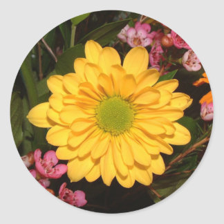 Yellow Gerber Daisy Round Stickers