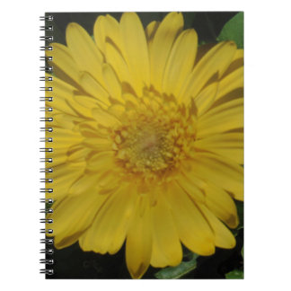 Yellow Gerber Gerbera Daisy Notebook