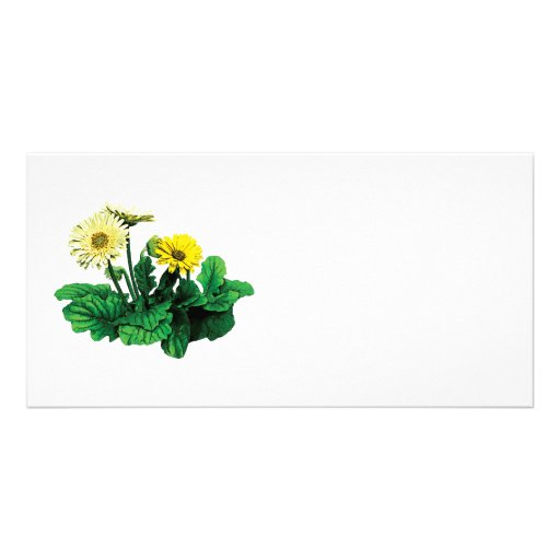 Yellow Gerbera Daisies Personalized Photo Card