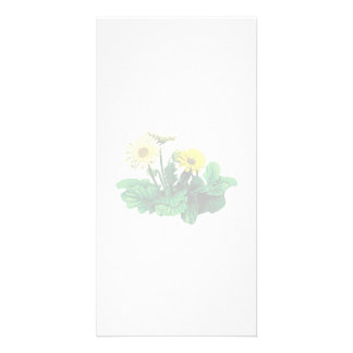 Yellow Gerbera Daisies Picture Card