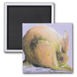 yellow hare magnet