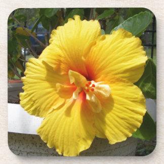 Yellow hibiscus art drink coasters