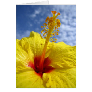 Yellow Hibiscus Note Card