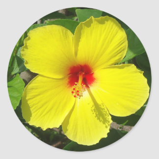 Yellow Hibiscus Round Sticker