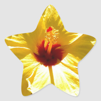 Yellow Hibiscus Star Sticker