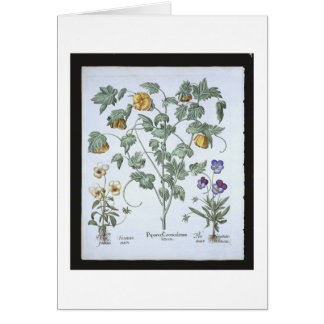 Yellow Horned Poppy, from the 'Hortus Eystettensis Greeting Card